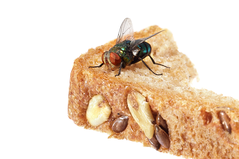 Fly Pest Control in Luton Bedfordshire